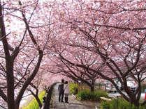 1泊2食【河津・伊豆桜まつり】お花見ドライブ♪《特典付》プラン
