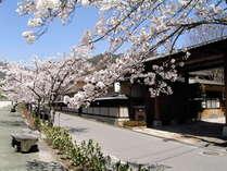 春の夷毘沙門 ※昼神温泉の桜並木は例年4/5~10頃が見頃です