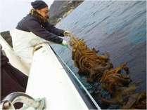 摂ったワカメを食べよう! 期間限定2月11日~3月26日  船で行く!ワカメ刈り体験プラン♪