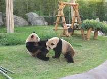 【アドベンチャーワールド割引チケット付】かわいいパンダに会いに行こう!車で10分♪