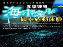 開催日限定【海ホタル鑑賞プラン】(6/23~9/29)≪お部屋食≫