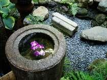 京町家の小さな自然 「坪庭と手水鉢」