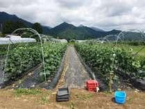 【収穫体験】安曇野ちひろ公園に隣接する体験交流畑