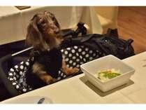 最大の楽しみとも言えるお食事を愛犬も楽しむことができます。