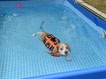 【夏季限定】愛犬用プールで大はしゃぎ♪夏の想い出に♪