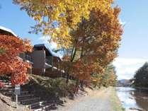 秋には「御影用水×紅葉」のコラボレーションが愉しめます。
