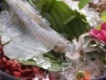 夏の香住名物「活イカの姿造り」。コリコリとした食感と動いている様子も楽しんで!