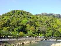 ☆新芽が出てきて緑いっぱいの新緑の頃の嵐山。朝は気持ちいい!!