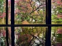 毎年3月ごろには女性大浴場から見えるお庭に紅梅が。四季を楽しみながら自慢の温泉をお楽しみください。