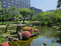 池の色鮮やかな錦鯉が泳ぐ姿を見ながら日本庭園散策もお楽しみいただけます。