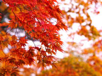 【秋旅】秋の夜長に温泉三昧♪紅葉スポットへアクセス便利!<2食付>