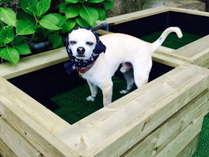 ペット用の足湯が完成しました!アルカリ性単純温泉です。