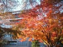 東館客室前の紅葉(例年では10月下旬~11月中旬に見ごろとなります。)