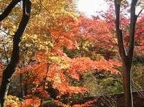 敷地内の美しい紅葉。四季の移り変わりを楽しめます。(例年では10月下旬~11月中旬に見ごろとなります。)