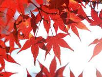 秋のお得なプラン