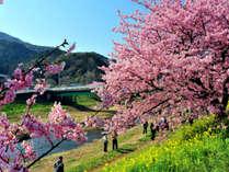 水上山荘の道中には桜並木があります。車で眺めながらどうぞ〔例年:4月中旬~5月頭まで〕