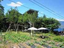 高社山の中腹ゲレンデが自家菜園に変わります