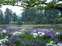 今だけの「平泉」【あやめ】【あじさい】ホタルに『前沢牛&ウナギ』旅情タップリ、湯宿で過ごす東北旅情
