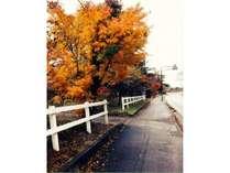 八ヶ岳オレンジ色。美しい紅葉が見ごろをむかえております。