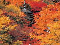 【秋の紅葉めぐり】~大和路をゆく~談山神社は目の前♪吉野山・室生寺・長谷寺も★