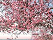 【期間限定】早春のつくばを満喫!~筑波山梅まつり宿泊プラン~ ★朝食付★ エポカル館