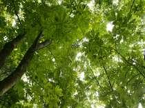 新緑の木々から漏れる高原の柔らかな日差し。緑溢れる高原で癒しのひと時を…。