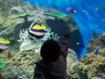 **【アクアワールド大洗】大洗の生物を中心にした体験型展示で「観る」だけでなく「学べる」水族館。