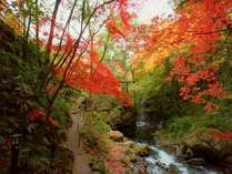 奥湯河原の紅葉