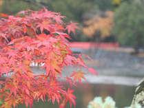 ◆秋旅◆宇治で紅葉散策★夕食は秋を彩る京料理をご賞味♪(特典付)