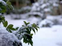 雪が積もる庭園もなんとも風情がございます。