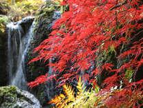 【秋の風景】9階庭園の様子。有馬温泉の紅葉は11月中旬が見頃です。