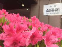 5月~6月頃には、玄関や庭園のつつじが鮮やかに咲き誇ります。