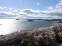 当館スカイラウンジからの桜の眺め。テラスに出て、爽やかな海風に吹かれながら写真撮影はどうですか