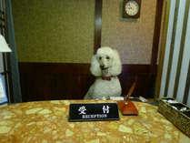 *[看板犬]皆様をお出迎えすることもございます!