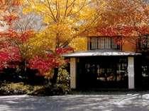 紅葉まっさかりの玄関前 木もれ陽の中をどうぞ、、、