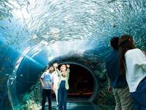 *上越市立水族博物館「うみがたり」/当館から車で約25分の、大人も子供も楽しめる水族館!
