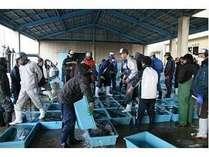 【伊良湖魚市場】セリは12:30頃~となっております。