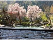 内風呂から見える露天風呂の桜