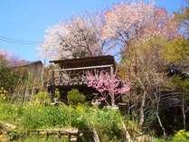 「森のおくりもの」の東屋です。周辺の4月の初旬は山桜が満開となります。