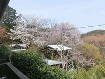 和室のベランダから隣地のパン工房と山桜
