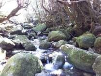 お土産付き!屋久島の人気スポット白谷雲水峡へ無料で送迎いたします