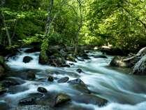 【秘湯白布の自然】手つかずの自然が織りなす美しい風景が一面に広がります