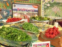 期間限定!新鮮野菜が魅力のサラダバー
