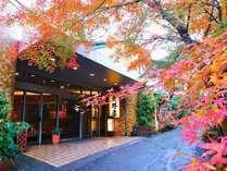 錦秋の紅葉。当館玄関前の染井吉野、もみじの木々が桜の花、新緑、紅葉と季節に彩を添え、目にも鮮やか♪