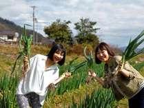 【農業体験】収穫した野菜はお土産に持ち帰りOK♪季節の旬野菜の収穫体験<2食付>
