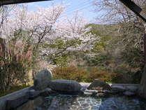 大浴場の露天風呂では、さくらを見ながら温泉が楽しめる  春