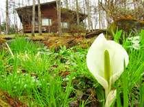 *【コテージ外観】周辺には自然が豊富!四季折々、お楽しみいただけます。