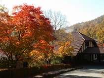 紅葉の時期(10月から11月)には美しく色づいた姿で、大きなもみじの木がお出迎え♪