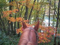 紅葉を馬上から眺める