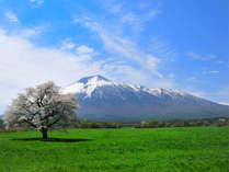 【上坊の一本桜】見頃は5月上旬~中旬です。ホテルよりお車で約10分
